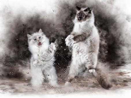 Les chats, ces grands sages qui nous guident sur le chemin de la vie ...