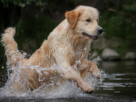 13/05 : Séances photos canines au bord de la Lesse
