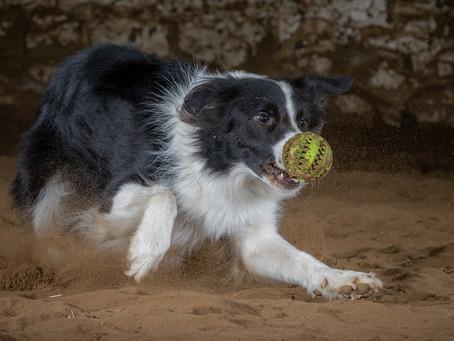 07/03 : Séances photos de chiens dans une grange