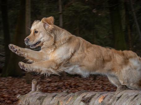 14/03 : Séances photos portraits chien-humain à Wavre