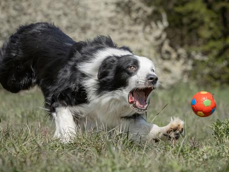 13/06 : Séances photos de chiens en action à Sclessin