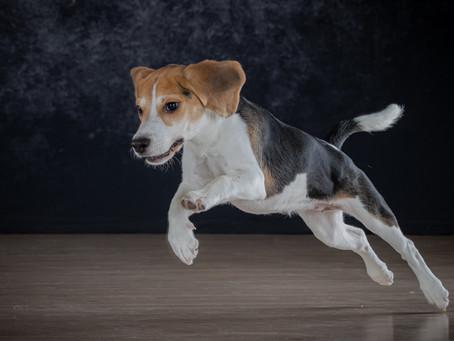 24/04 : Séances photos petits animaux en mode studio à Bouge