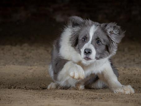 21/03 : Séances photos de chiens à Sauvenière (Gembloux)