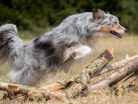 19/06 : Atelier de photographie de chiens en extérieur