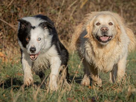 28/03 : Séances photos de chiens dans l'action à Wavre