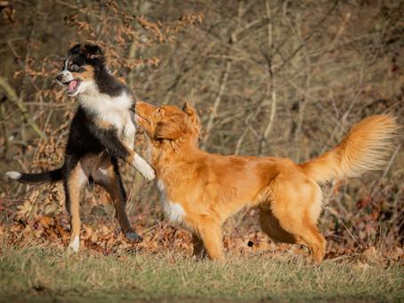 10/04 : Atelier de photographie de chiens en extérieur