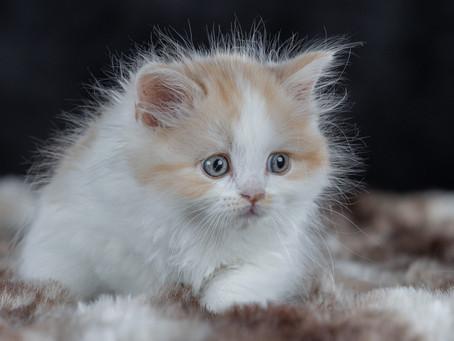 2/10 : Séances photos petits animaux en mode studio à Bouge
