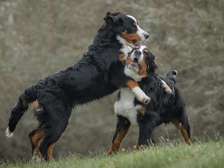 16/05 : Séances photos de chiens dans l'action à Bouge