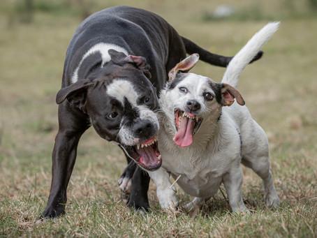 10/01 : Séances photos de chiens dans l'action à Wavre