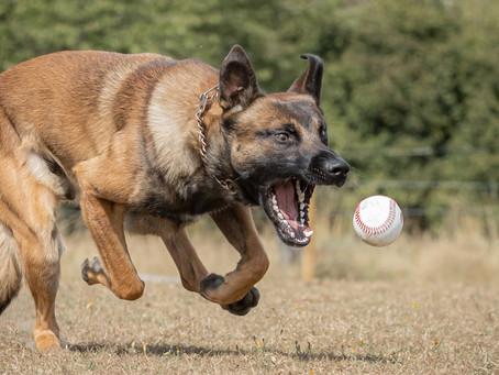 18/07 : Séances photos de chiens dans l'action à Bouge