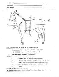 Horse Measurement For TKM Blanket.jpg