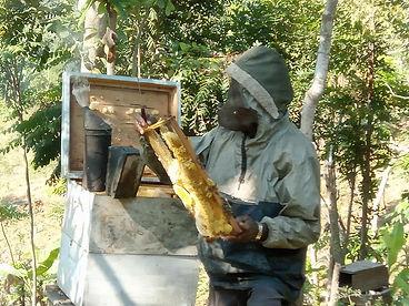 Du Miel en Grande Anse