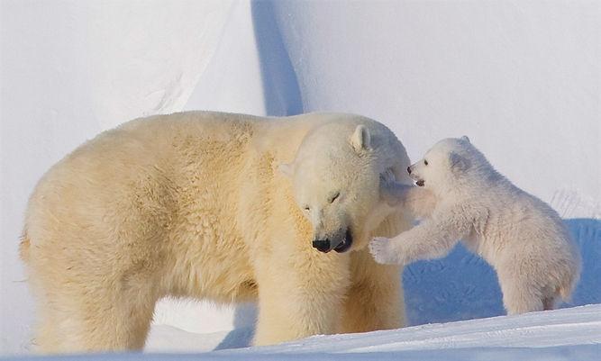Polar Bear Partners.jpeg