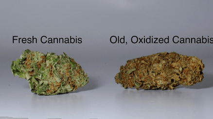 6 WAYS TO TELL YOUR WEED IS GOOD QUALITY