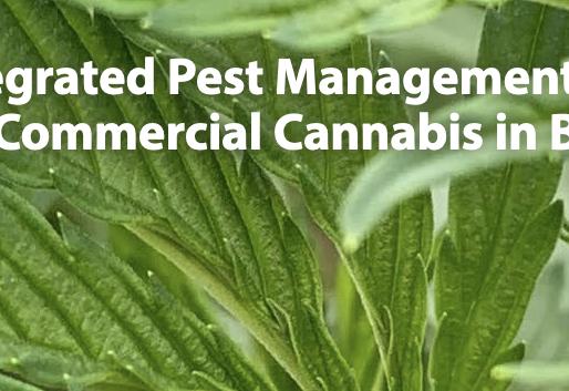 Cannabis Pest Management, Credit: Tom Ulanowski