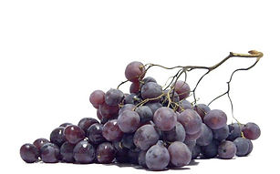 kuvitus-viini-4.jpg