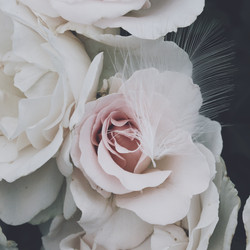 Plume and rose