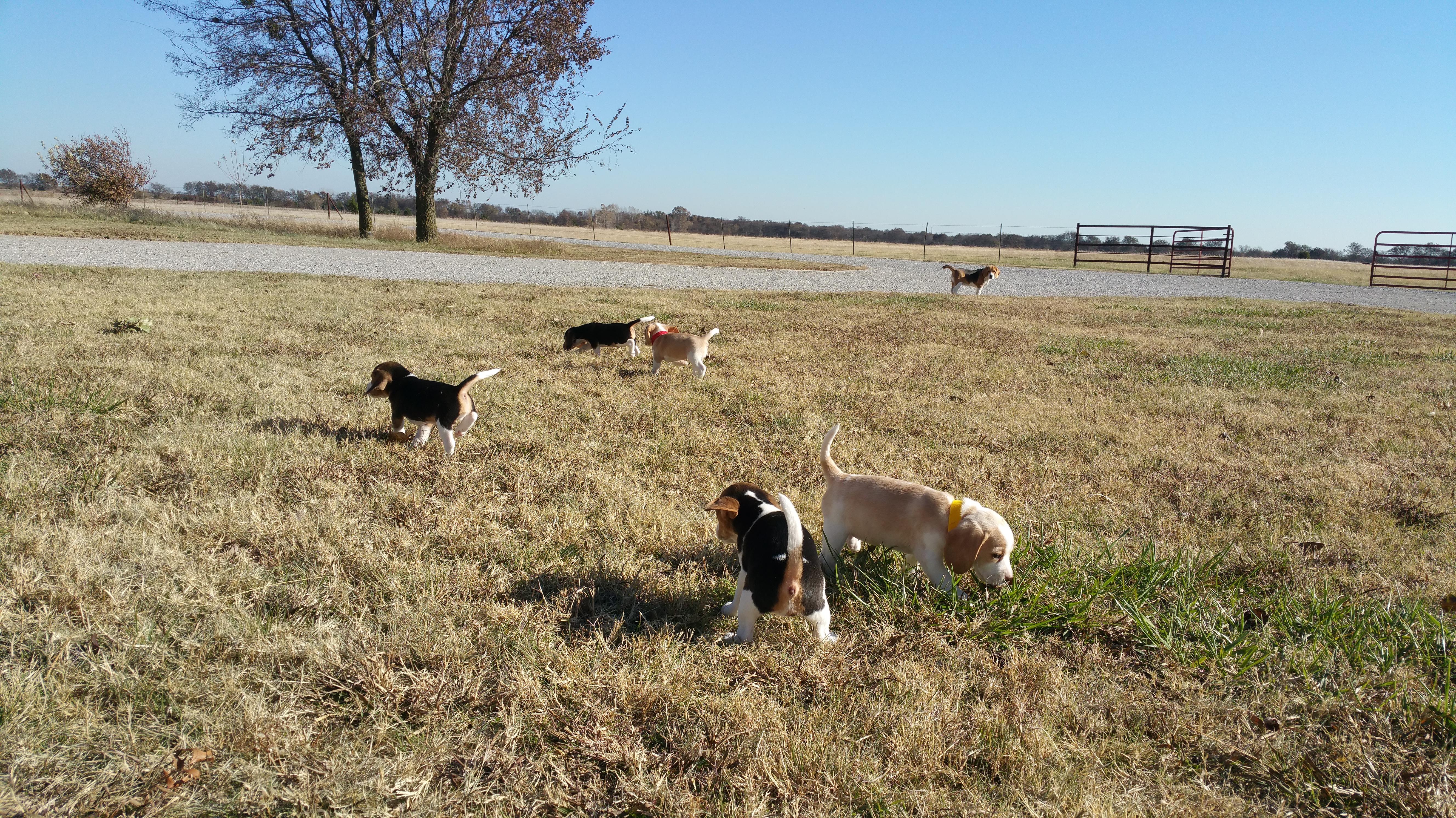 Pups running Wild