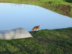 Sally by the pond