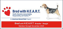 Bred with Heart - Beagle.jpg
