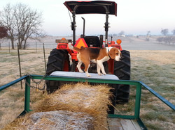 Helping Dad on the Tractor