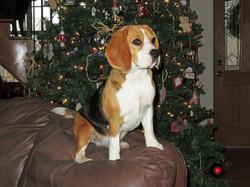 Sadie at Christmas