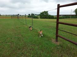 Runnin' the fence