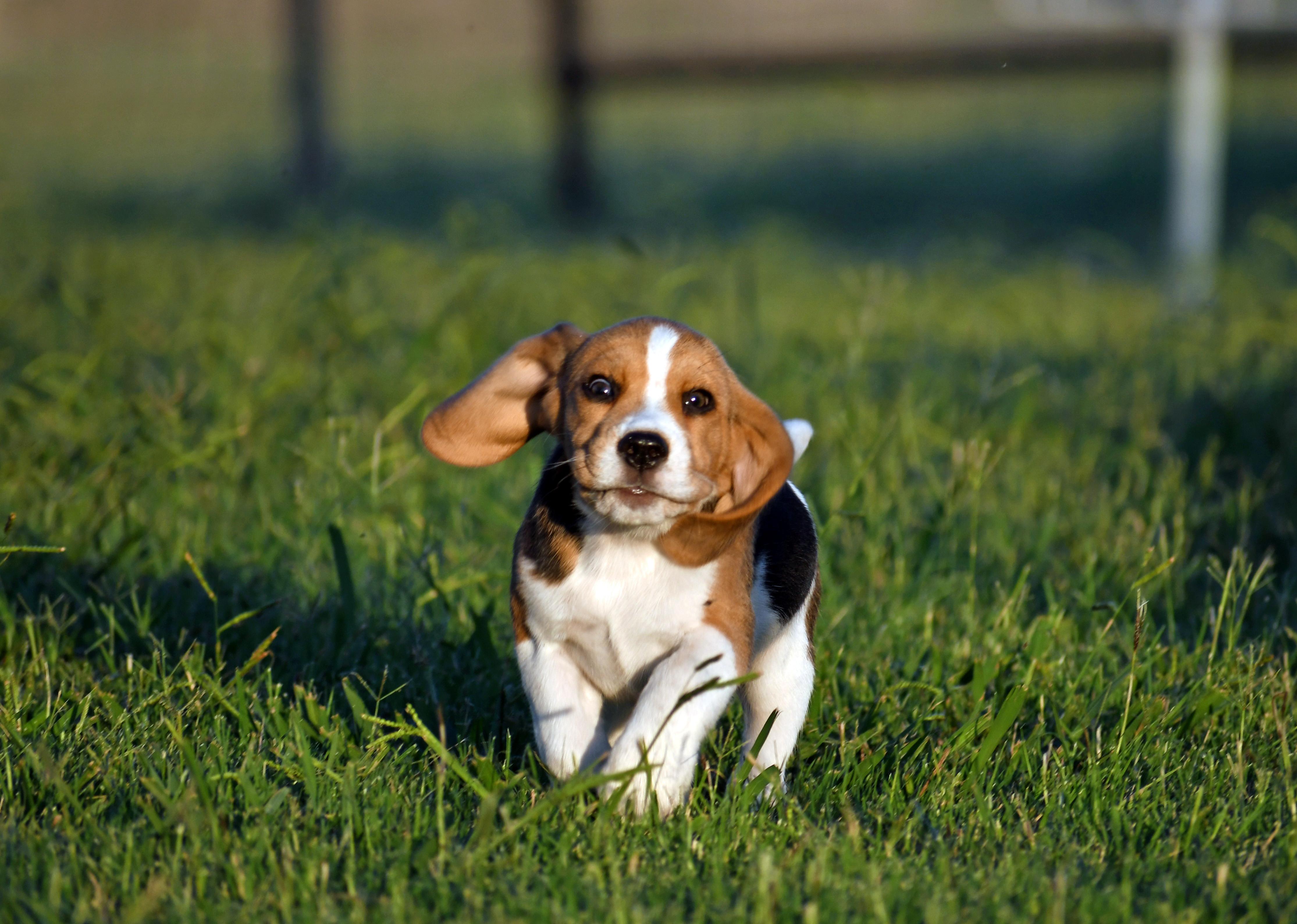 KanD Puppy Pickup