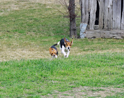 Abbie and pup running the farm