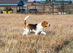 Everheart, running field