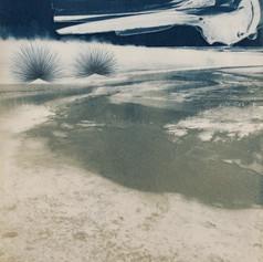 Yellowstone National Park/Bahia de los Angeles/San Diego: Hot Spring, Porpoise Skull, Watercolor Palette Well, Mock Mesquite