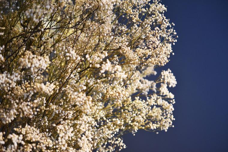 Tartare_Visavis - white tree_zoomin.JPG