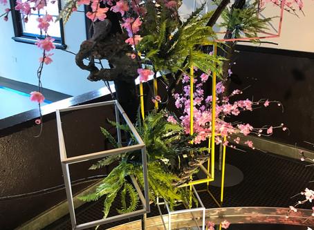 如果能延續生命,我們可以做什麼?|談黃楷馨的山櫻花計畫