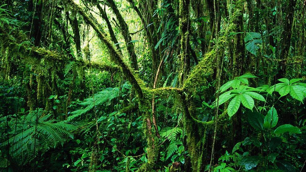 348870-best-jungle-background-1920x1080-