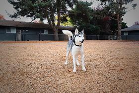 DogparkDog.jpg