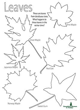 Leaves Colouring Page CWIT.jpg