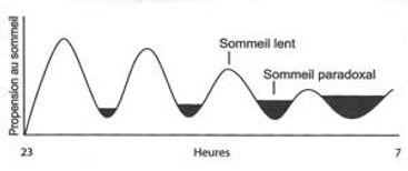 mecanismes-sommeil-lent-paradoxal.jpg