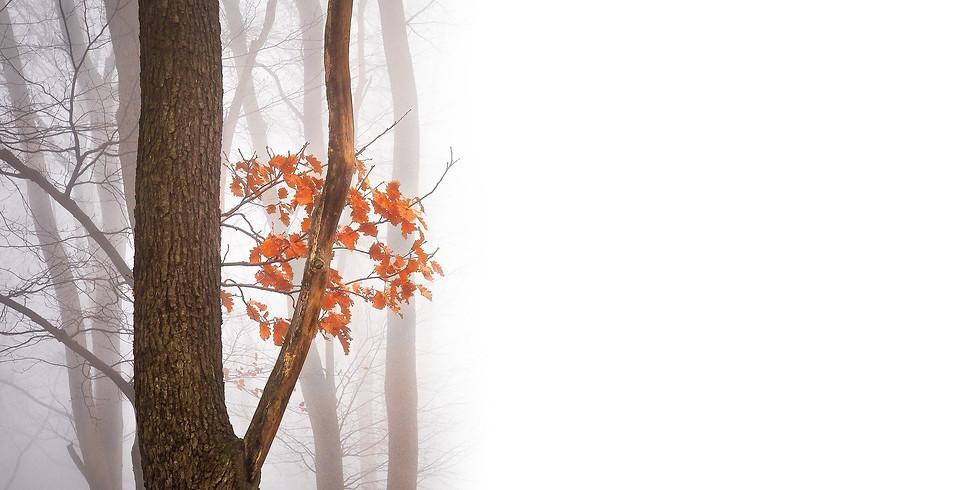Fall Gratitude Socials