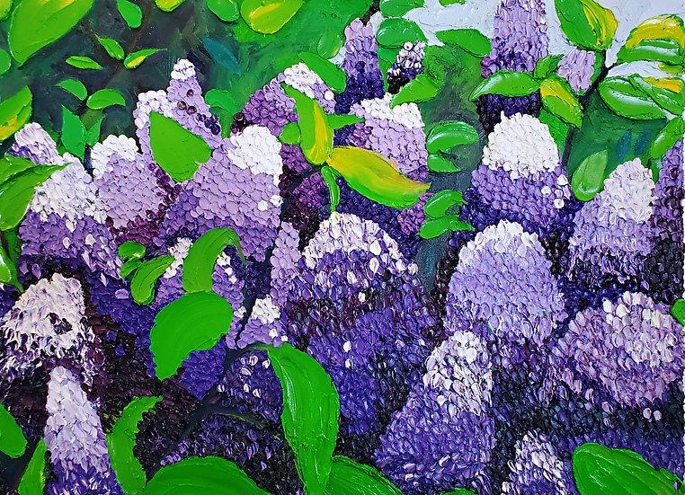 Highland Park Lilacs