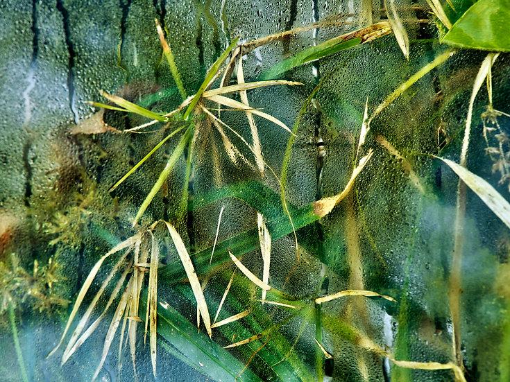 Landscape of Inquiry: Biosphere 2 #0853