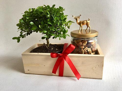 Christmas Bonsai Box