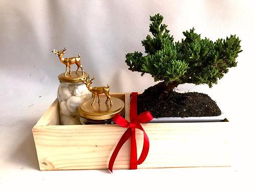 Big Christmas Bonsai