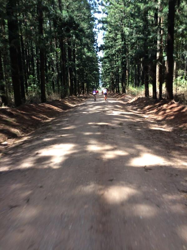 Yarraman Forestry