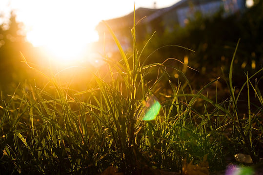 community-grass-lawn-144815.jpg