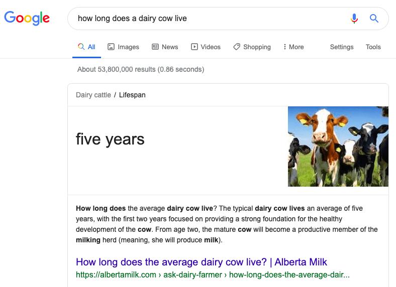 Dairy cow lifespan