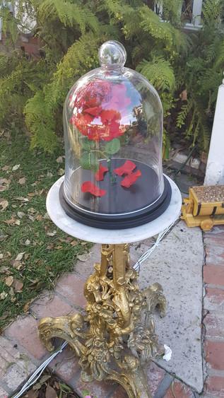 Christmas Rose.jpg