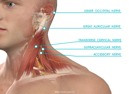 Shoulder Tension That Just Won't Go Away