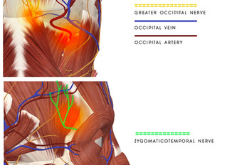 About diagnosis and treatment of Tension-type Headache and Migraine Headache