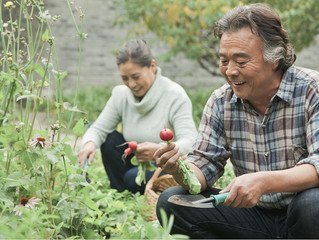 Investment Options and Retirement