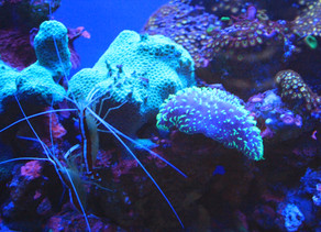 Alive and fluorescing... coral
